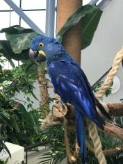 Beautiful bird at the Green Planet, Dubai.