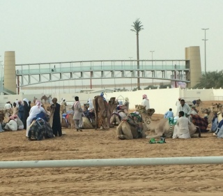 Surprise stop at the camel races on the way out into the desert.