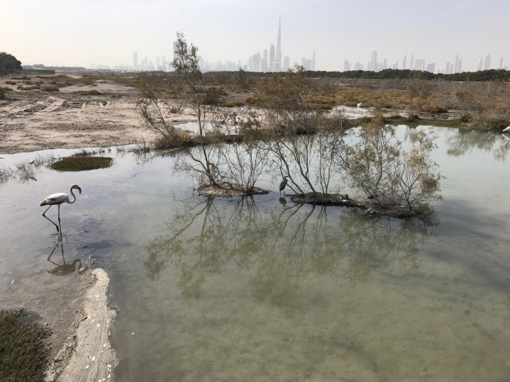 A view towards downtown Dubai from the Ras al Khor Sanctuary.