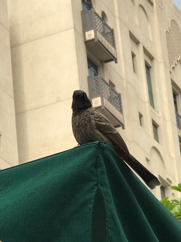 One of our Starbucks bird friends ready to swoop down for crumbs.