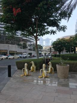 Dubai's Banana Ducks tend to hang out in fours.
